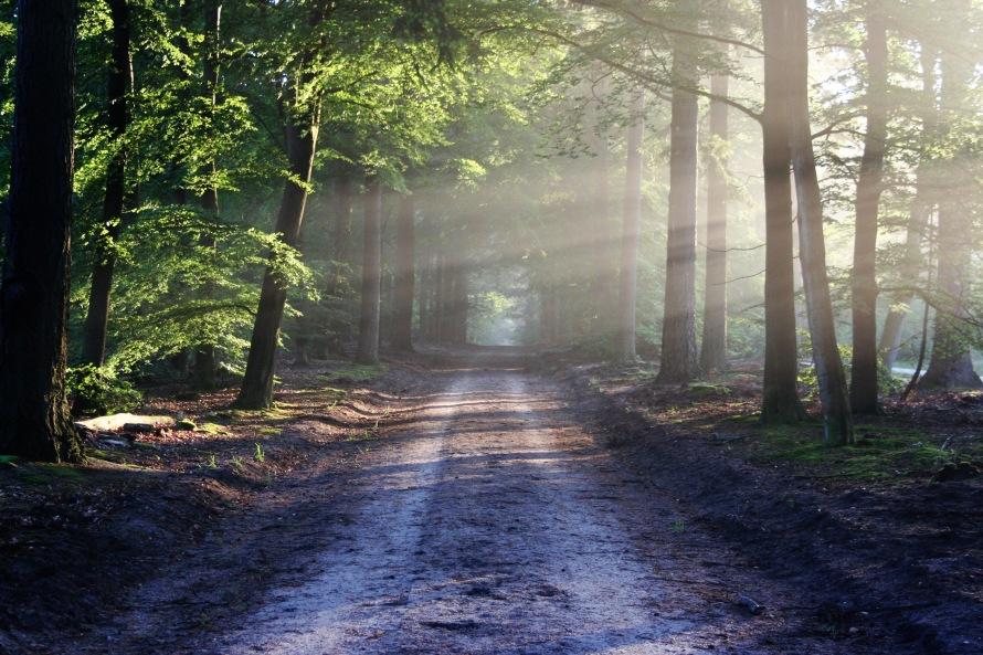 road-sun-rays-path-1